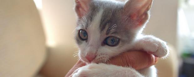 В Ирландии ищут человека, который должен будет обнимать кошек