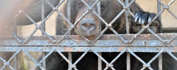 Казанский зооботсад просит жителей столицы Татарстана поделиться с животными ягодами и тыквой