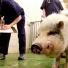 В Татарстане в следующем году появится скорая помощь для животных